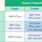 von Willebrand Disease DNA Testing Result Chart